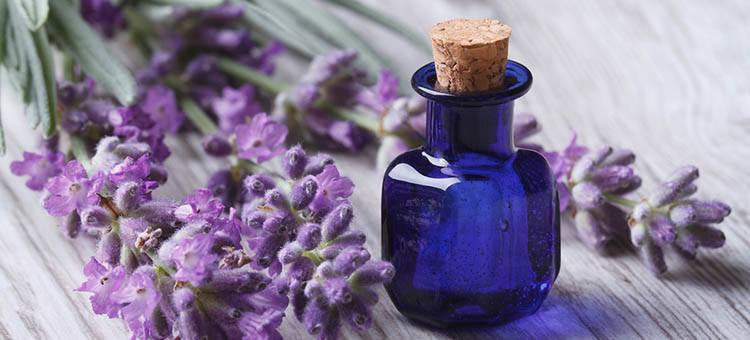 lavender-essential-oils